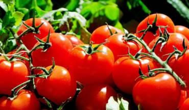 Así puedes recuperar el sabor auténtico del tomate tras sacarlo de la nevera