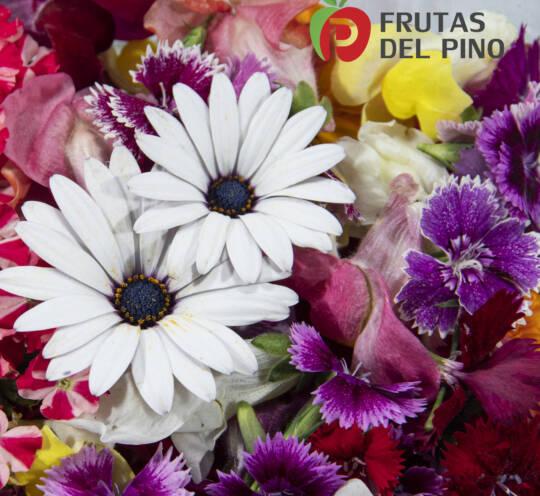Brotes, Flores, Hojas y Germinados